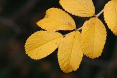 Lames colorées par automne Photos libres de droits