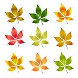 Lames colorées d'automne de vecteur. Fond d'automne Photo libre de droits