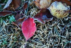 lames couvertes de gel Photo libre de droits