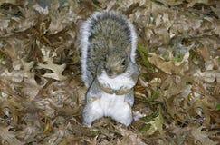 Lames d'écureuil de gris oriental Image stock