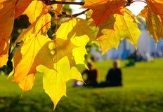 Lames d'érable d'automne Photographie stock libre de droits