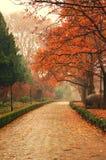 Lames d'érable d'automne dans la porcelaine de NanJing Image libre de droits