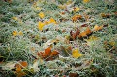 Lames d'érable dans l'herbe Photos stock