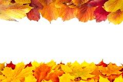 Lames d'érable et de viburnum d'automne photographie stock libre de droits