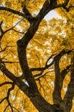 Lames d'or Photographie stock libre de droits