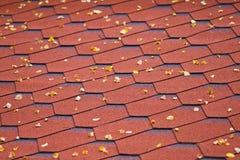 Lames d'Accacia sur le toit Image libre de droits