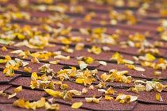 Lames d'Accacia sur le toit de maison Photographie stock libre de droits