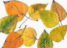 Lames d'automne. Image libre de droits