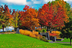 Lames d'automne photo libre de droits