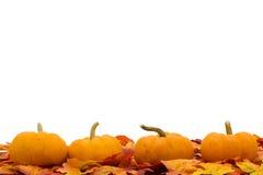 Lames d'automne Photo stock