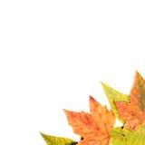 Lames d'automne. Photo stock