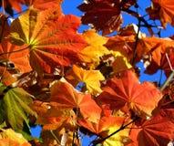 Lames d'automne Photos stock