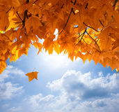 Lames d'automne Images libres de droits