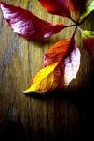 Lames d'automne. Photos stock