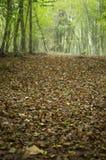 Lames d'automne Photos libres de droits