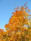 Lames d'automne. Photographie stock libre de droits
