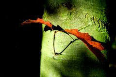 Lames d'automne. Images libres de droits
