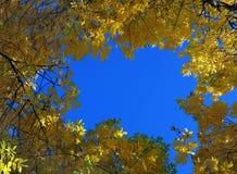 lames d'automne Photographie stock