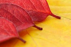 Lames d'automne photographie stock libre de droits