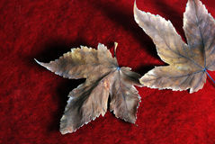 Lames d'automne Image libre de droits