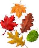 Lames d'automne illustration de vecteur