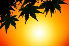 Lames d'automne au coucher du soleil photos stock