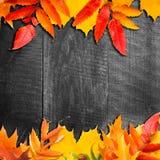Lames d'automne au-dessus de fond en bois Image libre de droits