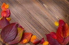Lames d'automne au-dessus de fond en bois Photos libres de droits