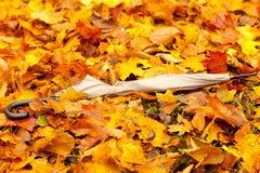 Lames d'automne au sol Photographie stock libre de droits