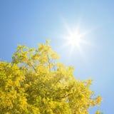 Lames d'automne avec briller du soleil Photos stock