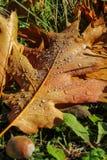 Lames d'automne avec des baisses de l'eau Photographie stock