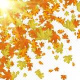 Lames d'automne avec des rayons du soleil Photographie stock libre de droits
