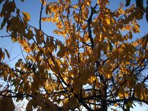 Lames d'automne avec le fond de ciel bleu image stock