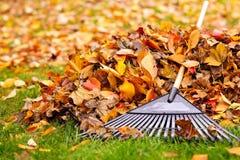 Lames d'automne avec le râteau Image stock