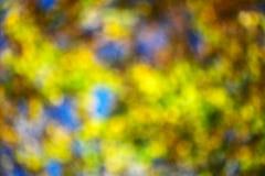 Lames d'automne brouillées Photo libre de droits