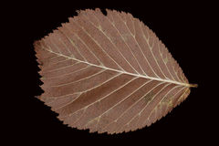 Lames d'automne brunes tombées sur un fond noir Image stock