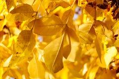 Lames d'automne colorées Photos stock