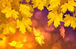 Lames d'automne colorées Photos libres de droits