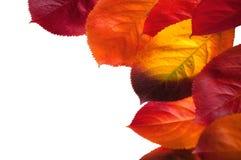 Lames d'automne colorées. Photos libres de droits