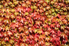 Lames d'automne colorées photo stock
