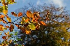 Lames d'automne colorées Photo libre de droits