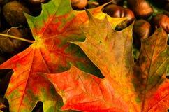 Lames d'automne colorées Image stock