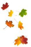 Lames d'automne colorées Photographie stock