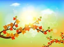 Lames d'automne colorées illustration de vecteur