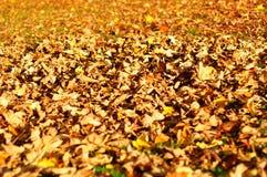 Lames d'automne colorées Image libre de droits