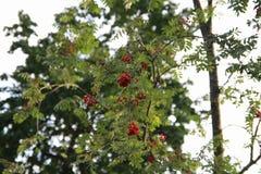Lames d'automne colorées Arbres d'automne nature saisons Photo stock