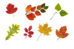 Lames d'automne colorées d'isolement sur le blanc. Images libres de droits