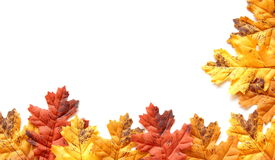 Lames d'automne colorées d'isolement sur un backgro blanc Photographie stock libre de droits