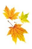 Lames d'automne colorées soignées image libre de droits