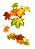 Lames d'automne colorées tombant vers le bas image libre de droits